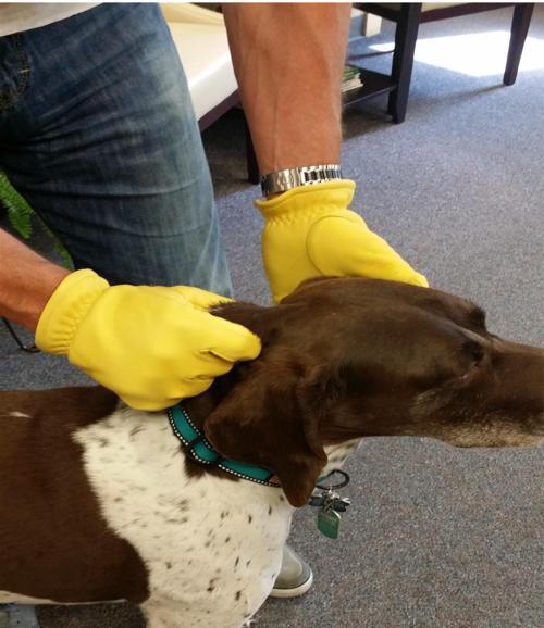 Premium Animal Handling Gloves